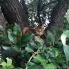木の上のキジトラ猫さん