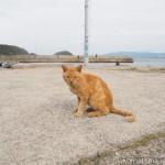 【福岡】猫の島「相島」に行ってきました