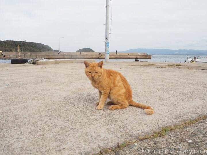 相島 茶トラ猫さん