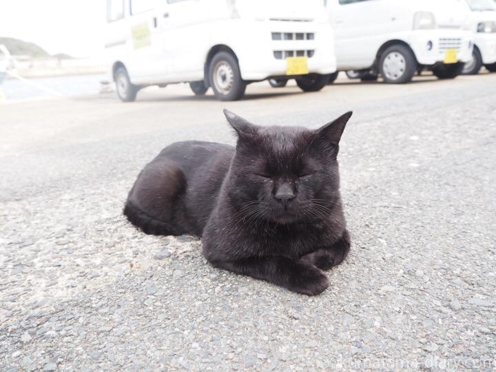 相島 黒猫さん