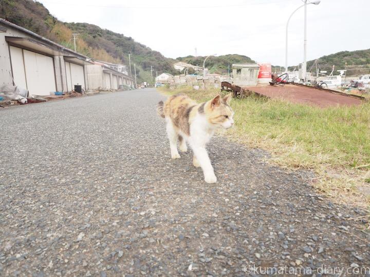 相島の三毛猫さん