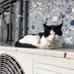 【若松区】室外機の上の猫さん