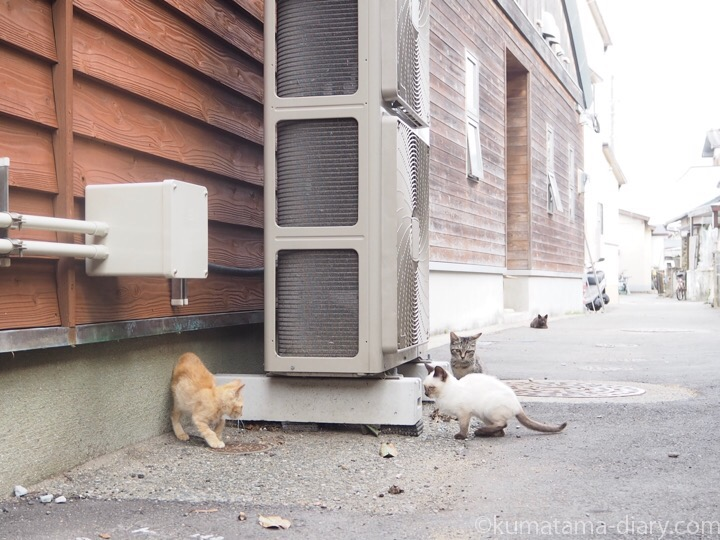 相島 遊ぶ子猫さん