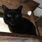 【月命日】脇の下がハゲた黒猫