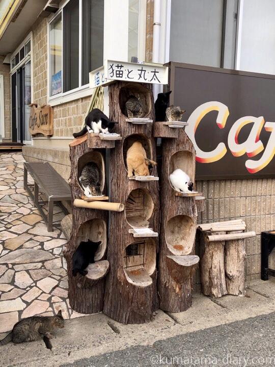 相島 猫と丸太