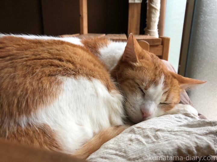 IKEA猫ベッドで眠るたまき