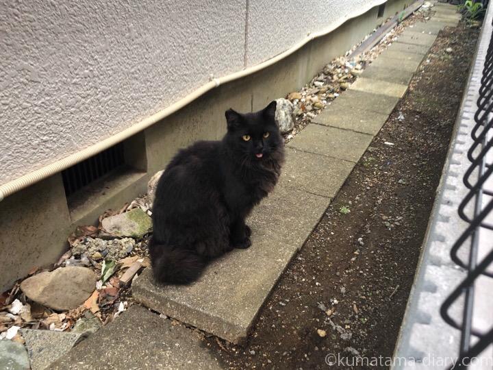 長毛黒猫さん
