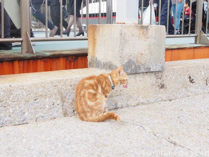 相島猫さん
