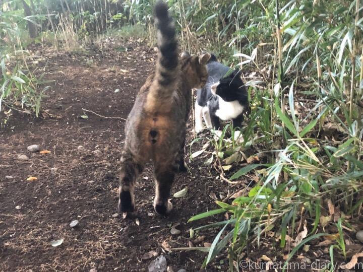 黒白猫さんとキジトラ猫さん
