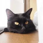 HAPPY CATのドライフードを盗み食いした?黒猫