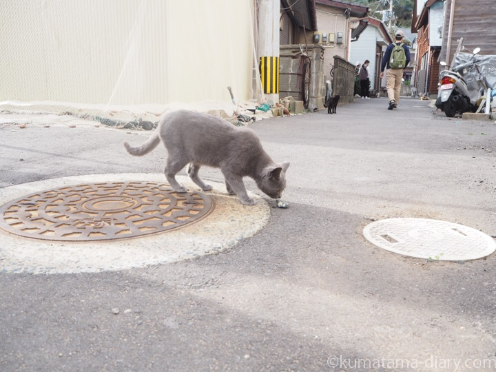 相島 グレーの猫さん