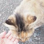 【福岡】猫の島「相島」の長毛猫さんをなでなでしました