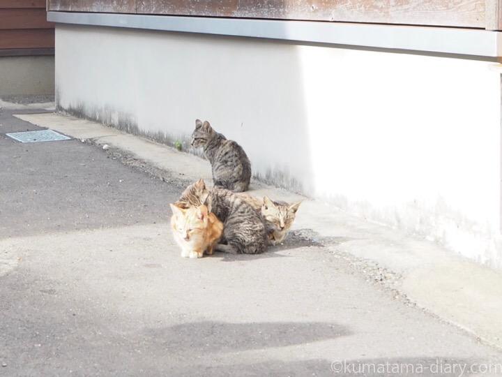 相島の子猫