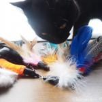 「CATOM 猫のおもちゃ 猫じゃらし 羽のリフィル交換用パック」を買いました