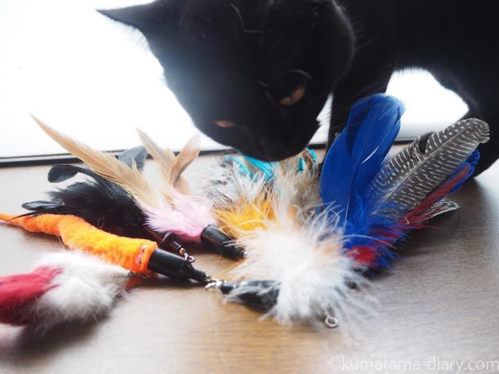 猫じゃらし羽とふみお