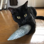 Plusgraphの「ケリグルミ」で遊ぶ猫たち