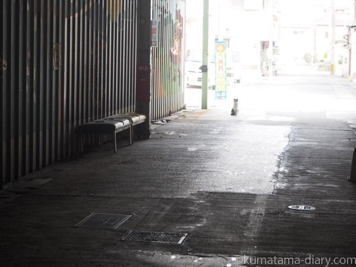 市場の三毛猫さん
