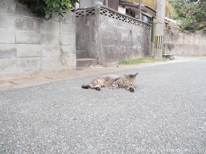 相島の猫さん