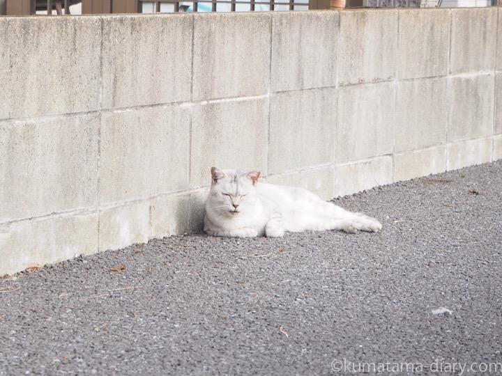 駐車場の猫さん