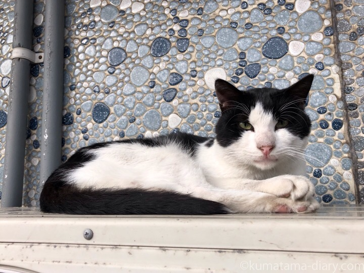 室外機の上の黒白猫さん