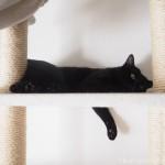 キャットタワーで前足が落ちたまま寝る猫
