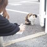 【若松区】三毛猫さんに再会