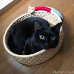 yonekichiさんの「鍋型ベッド」から首を出す猫