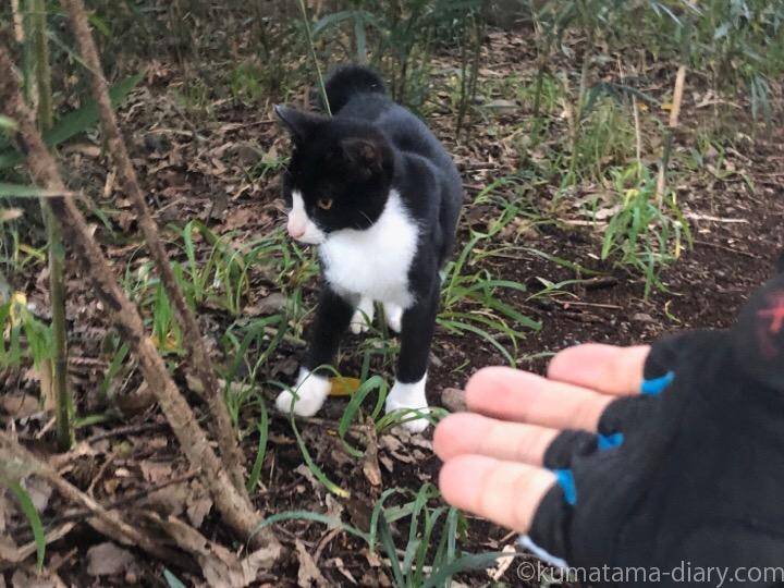 黒白猫さんと彼の手