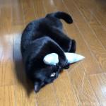 ケリグルミで激しく遊ぶ猫を見つめる猫
