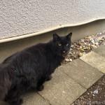 舌をしまい忘れた黒猫さん