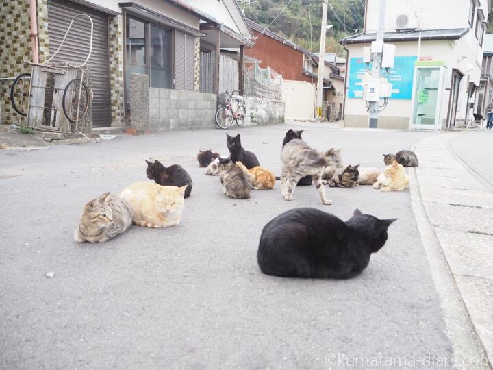 相島の猫さんたち