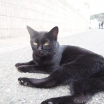 【福岡】目の前でごろんごろんしてくれた「相島」の黒猫さん