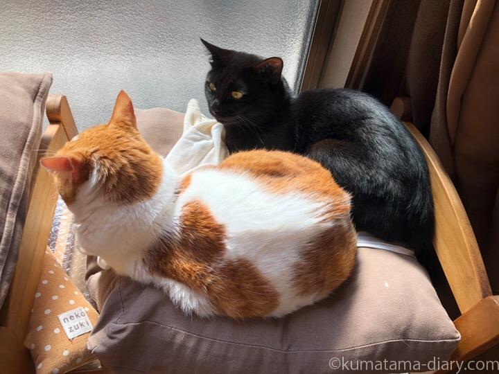 IKEA猫ベッドたまきとふみお