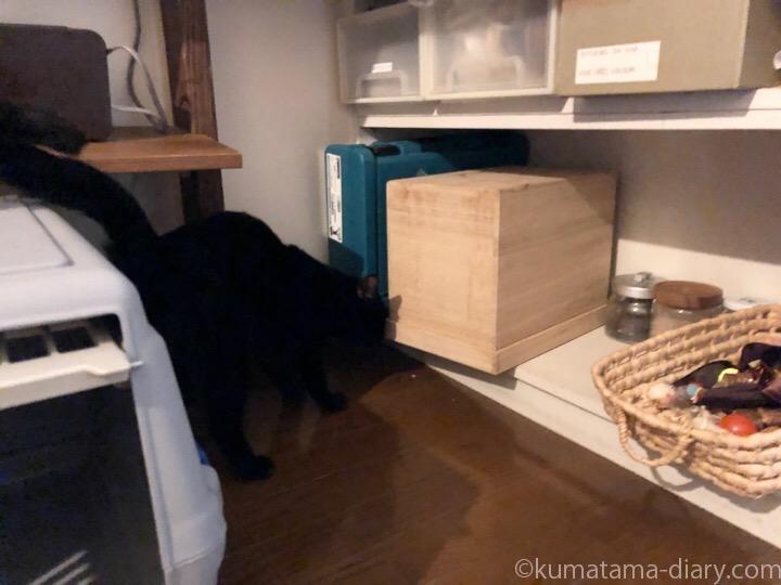 ふみおと猫のごはん保存BOX