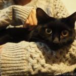 【月命日】流しの下が好きな猫
