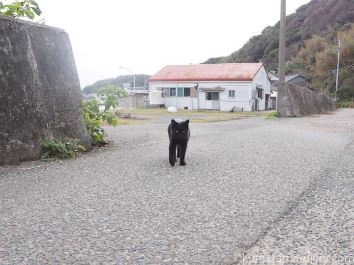 相島の黒猫さん