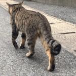 【福岡】猫の島「相島」でオス猫さんのにゃんたまを追いかけました
