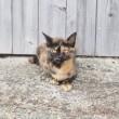 相島のサビ猫さん