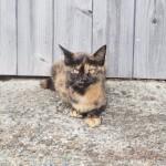 【福岡】人懐っこくて可愛らしい「相島」のメス猫さんたち