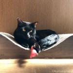 猫の家の「にっぷ棒」の上に座る黒猫