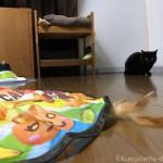 猫用電動おもちゃ「キャッチ・ミー・イフ・ユー・キャン2」にビビる猫