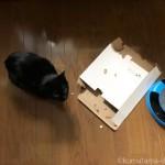フライングタイガーの猫用おもちゃ「逃げるネズミ」の空き箱をかじる猫