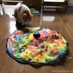猫用電動おもちゃ「キャッチ・ミー・イフ・ユー・キャン2」で遊ぶ猫