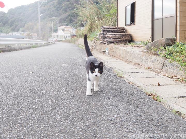 相島の黒白猫さん