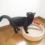 ロフトの窓が気になる黒猫