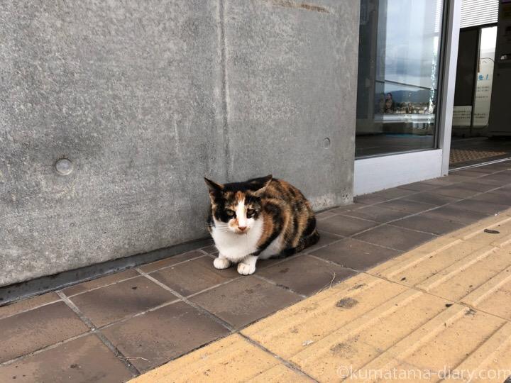 相島渡船新宮待合所の三毛猫さん