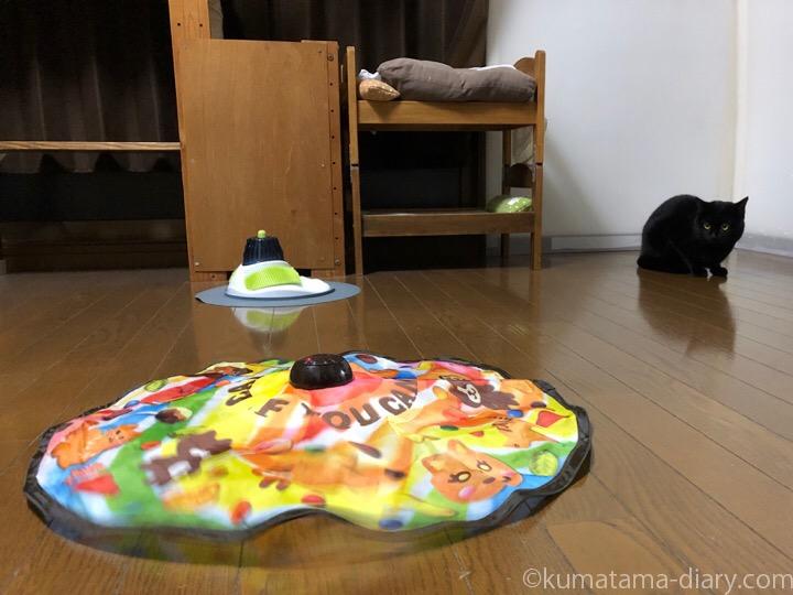 キャッチ・ミー・イフ・ユー・キャン2とふみお
