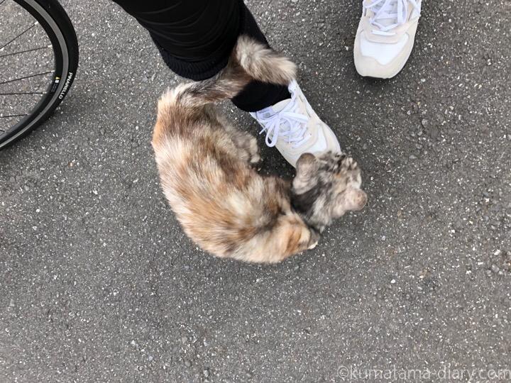 スリスリしてくれた猫さん