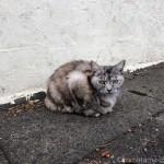 激しくスリスリしてくれた松戸市の猫さん