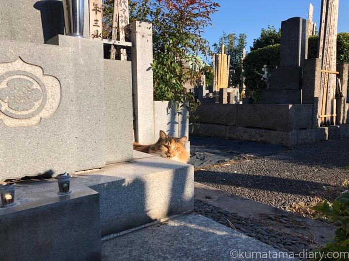 吉祥寺三毛猫さん